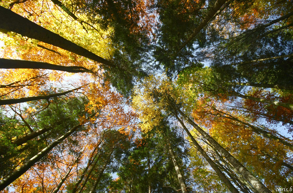 Une semaine, un thème : Ma commune verte, propre, agréable et sûr